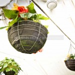 Flowering Plants in Hanging Baskets (Gardens and Flora Gallery)
