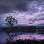 Tree in Lake Wanaka (Wanaka, New Zealand Gallery)