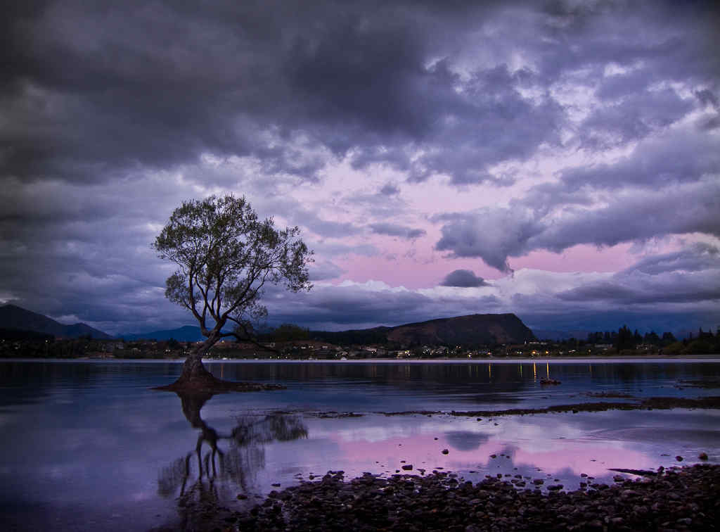 Often photographed Tree in Lake Wanaka